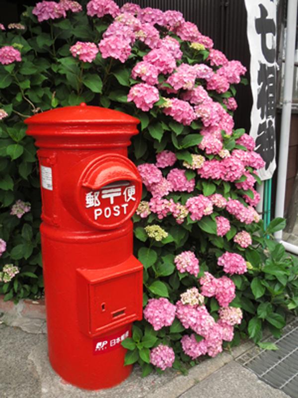 アジサイ|古都・鎌倉で紫陽花めぐり