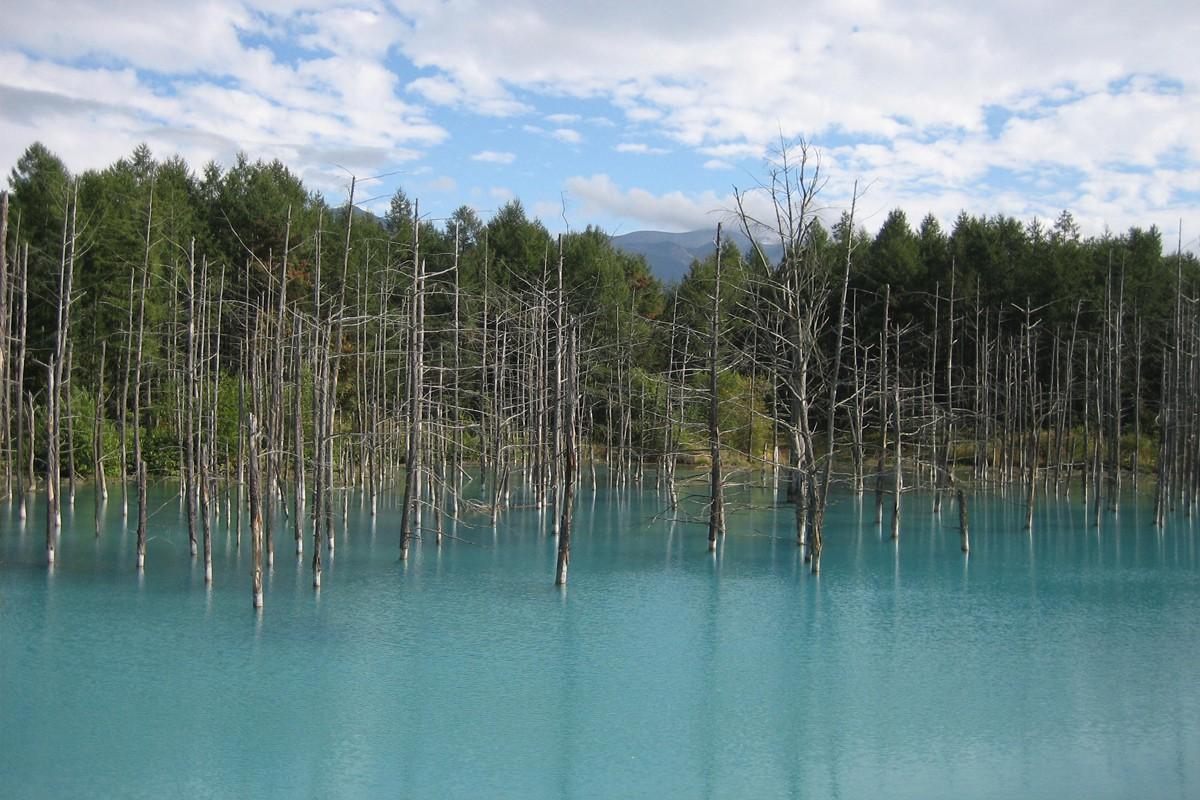 白金青い池|夏の旅は北海道で決まり!自然が織りなす絶景スポット富良野・美瑛で心もカラダも癒され旅