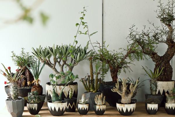 塊根植物のカリスマ・横町 健氏が手掛ける、スペシャリティショップ「ボタナイズ」がすごい!