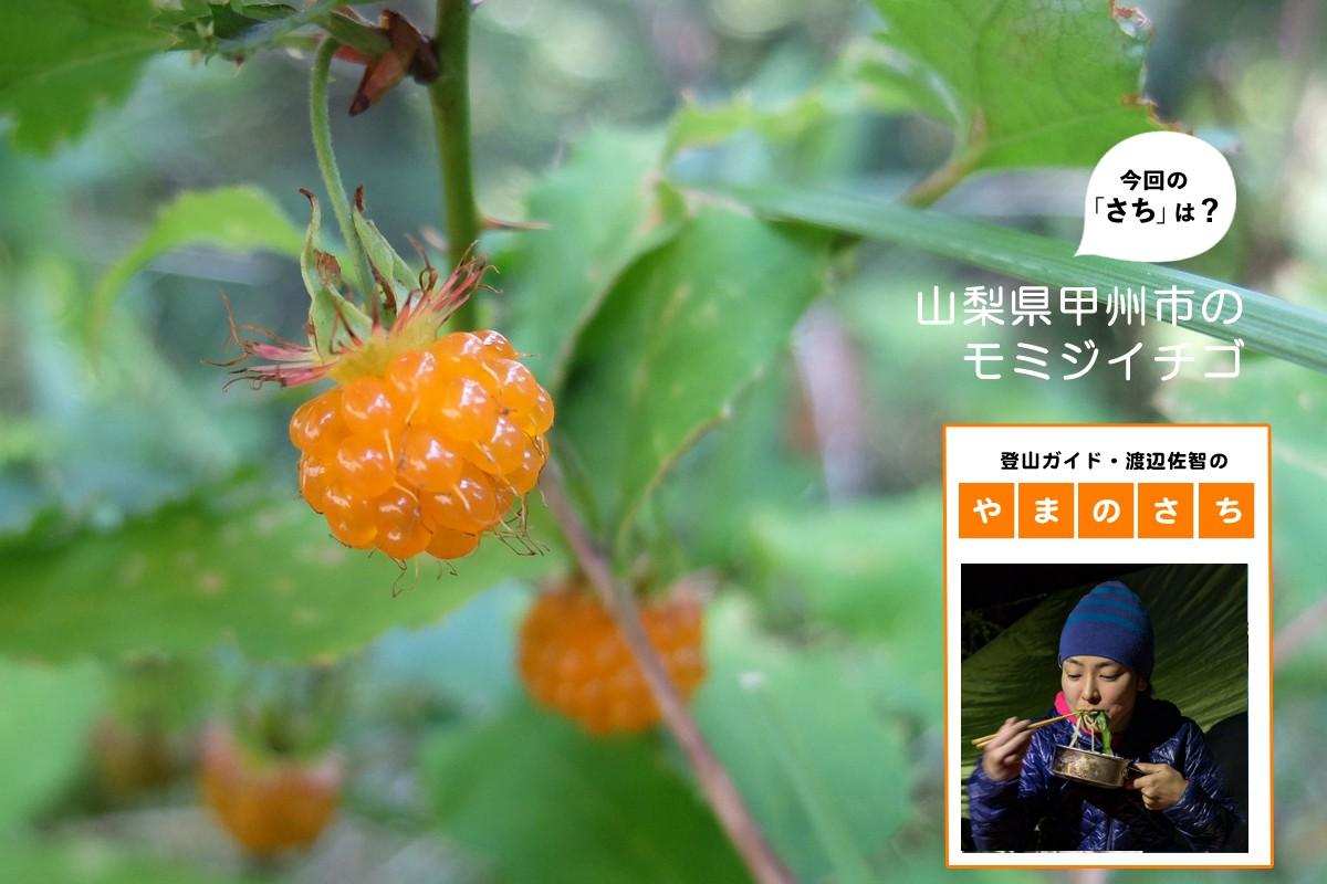 """キイチゴは甘酸っぱい夏の味【登山ガイド・渡辺佐智の""""やまのさち""""】"""