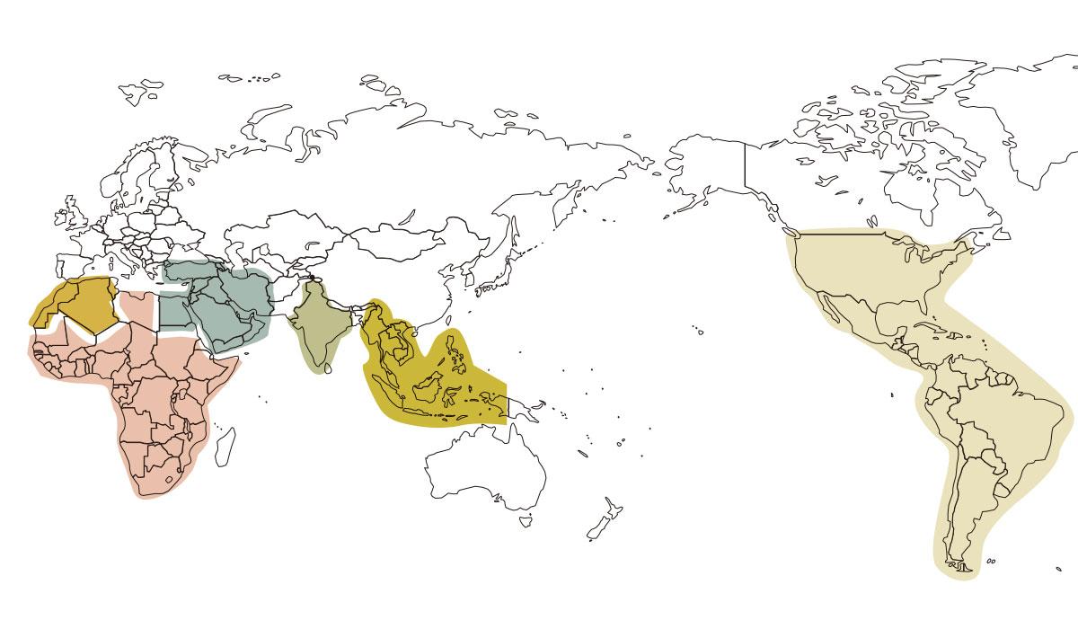 クミン世界地図