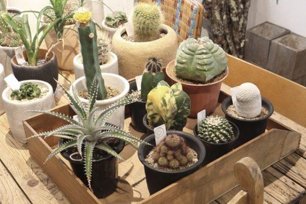 部屋を観葉植物でおしゃれに見せる! グリーンインテリア専門店のおすすめ4選。