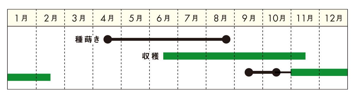パクチー栽培カレンダー