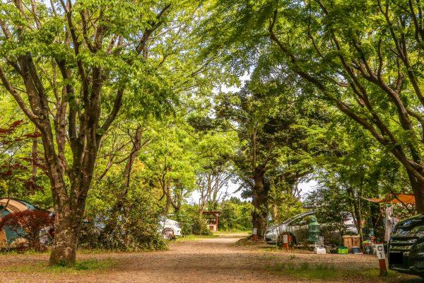 キャンプ場ガイド「有野実苑」(千葉県山武市)