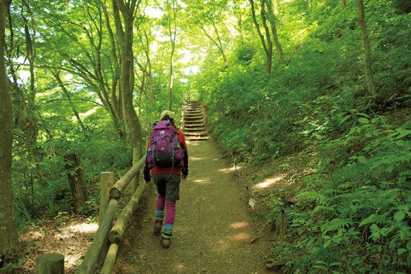 高尾山(稲荷山コース)登山ルート「豊かな自然が満喫できる山道を歩く」
