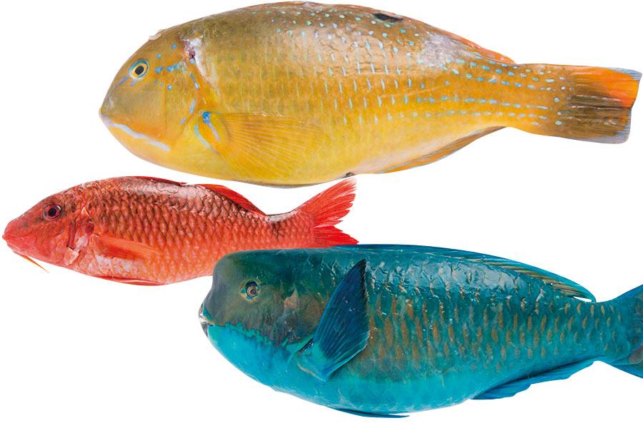 沖縄の魚図鑑イメージ