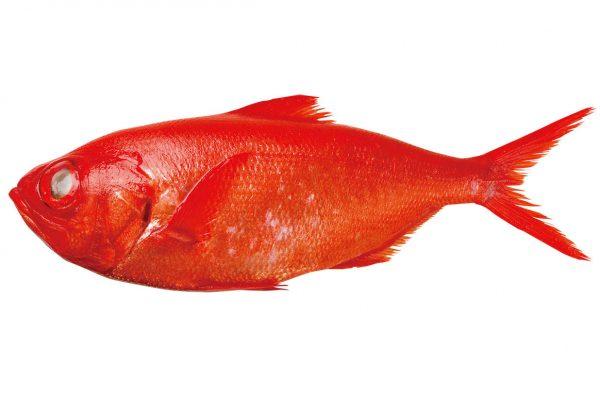 金目鯛〈キンメダイ〉|料理を愛する人のための魚図鑑