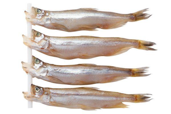 柳葉魚〈シシャモ〉|料理を愛する人のための魚図鑑