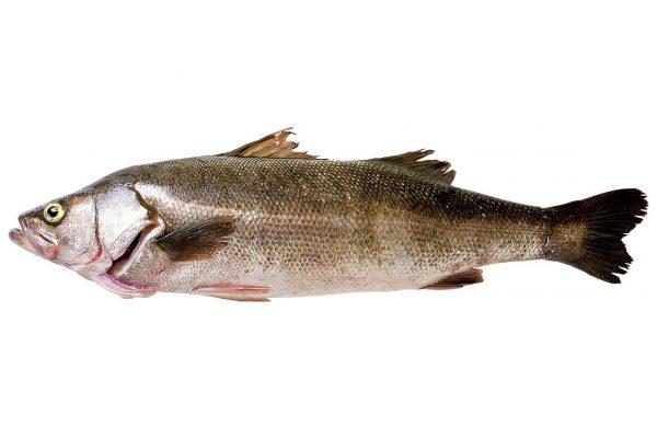 鱸〈スズキ〉|料理を愛する人のための魚図鑑