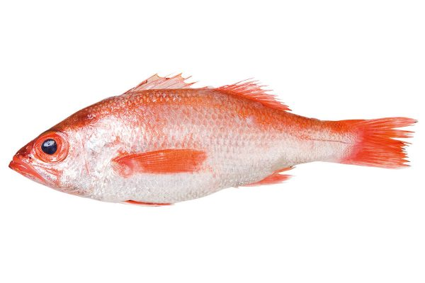 赤鯥〈アカムツ〉|料理を愛する人のための魚図鑑