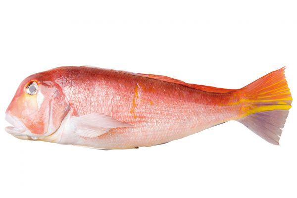 甘鯛〈アマダイ〉|料理を愛する人のための魚図鑑