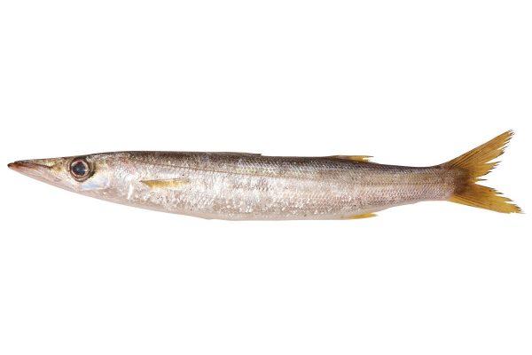 梭子魚〈カマス〉|料理を愛する人のための魚図鑑