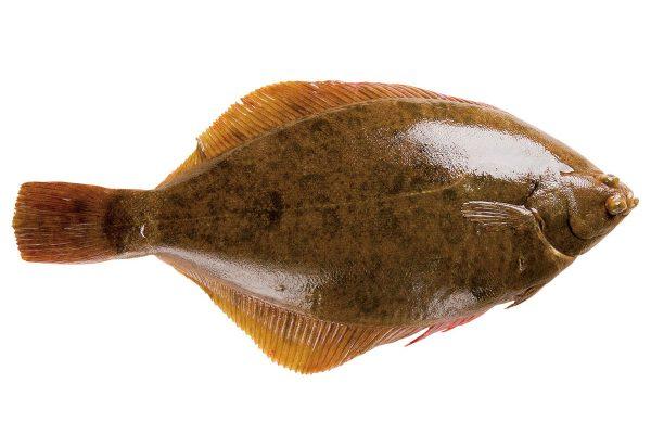 鰈〈カレイ〉|料理を愛する人のための魚図鑑