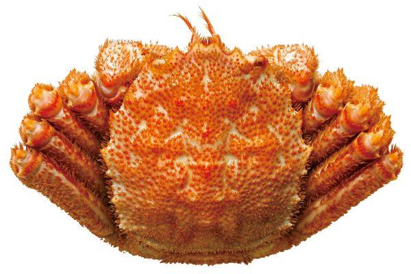 毛蟹〈ケガニ〉|料理を愛する人のための魚図鑑
