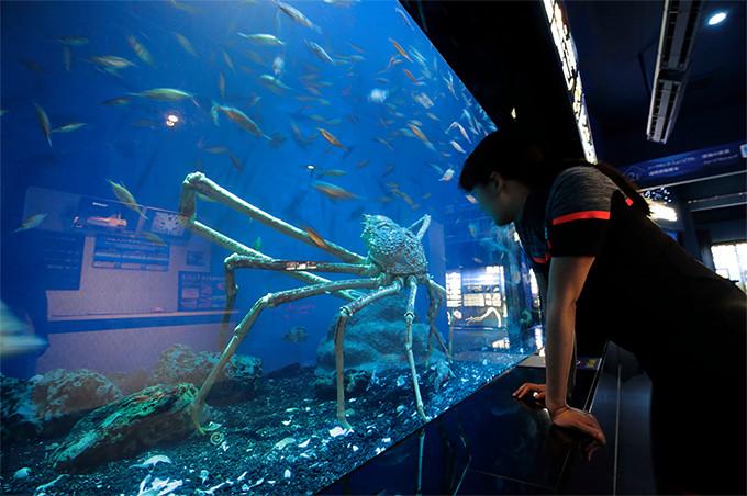 深海水族館で見た戸田港の名物、タカアシガニ。とにかくデカい!